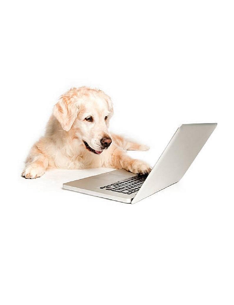 Golden Tricks 1 - Online Dog Trick Class